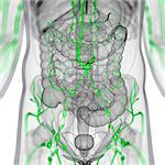 Lymphatic system, computer artwork. Stock Photo - Premium Royalty-Free, Artist: Science Faction, Code: 679-06198881
