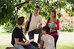 People and education, college students meeting and doing homework together in park Stock Photo - Royalty-Free, Artist: diego_cervo, Code: 400-06207017