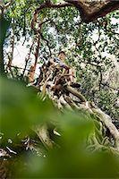 Boy sitting in tree top Stock Photo - Premium Royalty-Freenull, Code: 649-06305340