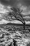 England, North Yorkshire, Twisleton Scar. Stock Photo - Premium Royalty-Free, Artist: IIC, Code: 6106-06309025