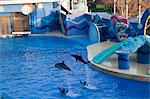 Dolphin show at Ocean Theatre, Ocean Park, Hong Kong Stock Photo - Premium Rights-Managed, Artist: Oriental Touch, Code: 855-06313813