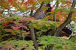 Autumn colours in garden of Kinkakuji, Kyoto, Japan Stock Photo - Premium Rights-Managed, Artist: Oriental Touch, Code: 855-06314403