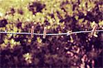 Clothes pins on clothesline Stock Photo - Premium Royalty-Free, Artist: GreatStock, Code: 632-06318005