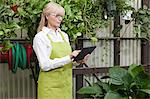 Senior gardener using digital tablet in garden center Stock Photo - Premium Royalty-Free, Artist: photo division, Code: 693-06324022