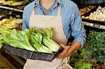 Midsection of man holding basket of bok choy in supermarket Stock Photo - Premium Royalty-Free, Artist: Siephoto, Code: 693-06324941