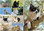 composite picture with tabby cat and kitten in the nature Stock Photo - Royalty-Free, Artist: cynoclub                      , Code: 400-06329747