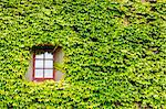 View of a closed window and of a wall covered with ivy Stock Photo - Royalty-Free, Artist: ale_rizzo                     , Code: 400-06331075