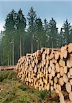 Stack of Spruce Logs, Odenwald, Hesse, Germany Stock Photo - Premium Royalty-Free, Artist: Michael Breuer, Code: 600-06334279
