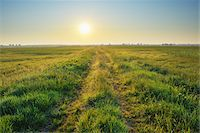 Path, Tadten, Burgenland, Austria Stock Photo - Premium Royalty-Freenull, Code: 600-06334488