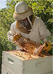 Beekeeper Removing Frame from Hive Stock Photo - Premium Rights-Managed, Artist: Burazin, Code: 700-06334459