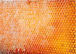 Close-Up of Honeycomb Stock Photo - Premium Rights-Managed, Artist: Burazin, Code: 700-06334467