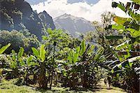french polynesia - hakani valley in nuku hiva island Stock Photo - Premium Royalty-Freenull, Code: 6106-06335358
