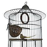 Bird cage Stock Photo - Premium Royalty-Free, Artist: I Dream Stock, Code: 6106-06335495