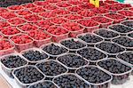 Berries for sale Stock Photo - Premium Royalty-Freenull, Code: 6106-06335907