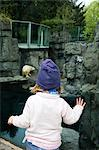 Girl looking at polar bear in zoo Stock Photo - Premium Royalty-Free, Artist: Matthew Plexman, Code: 6102-06336604