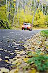 Car on road covered in autumn leaves Stock Photo - Premium Royalty-Free, Artist: Westend61, Code: 6102-06337047
