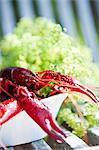 Crayfish on plate Stock Photo - Premium Royalty-Free, Artist: Photocuisine, Code: 6102-06337068