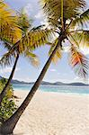 Palms over sandy beach Stock Photo - Premium Royalty-Free, Artist: Alberto Biscaro, Code: 6102-06337137