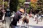 Approach to Daikegon-ji (Todaiji temple), Nara, Japan Stock Photo - Premium Rights-Managed, Artist: Oriental Touch, Code: 855-06337497