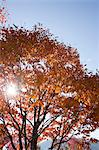 Autumn maples, Kyoto, Japan Stock Photo - Premium Rights-Managed, Artist: Oriental Touch, Code: 855-06337929