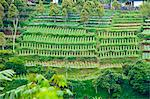 Vegetable terraces on a steep hill, Bandung, Java, Indonesia, Southeast Asia, Asia Stock Photo - Premium Rights-Managed, Artist: Robert Harding Images, Code: 841-06341177