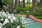 White roses and palm trees in the garden at La Mamounia Hotel in Marrakech, Morocco, North Africa, Africa Stock Photo - Premium Rights-Managed, Artist: Robert Harding Images, Code: 841-06341300