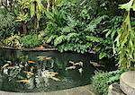Koi fish pond, Manila, Philippines, Southeast Asia, Asia Stock Photo - Premium Rights-Managed, Artist: Robert Harding Images, Code: 841-06341373