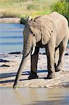 Elephant drinking, Pilanesberg National Park, Sun City, South Africa, Africa Stock Photo - Premium Rights-Managed, Artist: Robert Harding Images, Code: 841-06341675