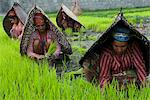 Female farmers at work in rice nursery, with rain protection, Annapurna area, Pokhara, Nepal, Asia Stock Photo - Premium Rights-Managed, Artist: Robert Harding Images, Code: 841-06341777
