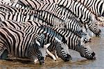 Burchell's zebra (Equus burchellii), Etosha National Park, Namibia, Africa Stock Photo - Premium Rights-Managed, Artist: Robert Harding Images, Code: 841-06342267