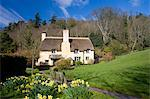 Thatched cottage and daffodils in the Exmoor village of Selworthy, Somerset, England, United Kingdom, Europe Stock Photo - Premium Rights-Managed, Artist: Robert Harding Images, Code: 841-06343379