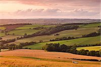 Grazing sheep and crop fields near Stockleigh Pomeroy, mid Devon, England, United Kingdom, Europe Stock Photo - Premium Rights-Managednull, Code: 841-06343499
