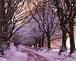 Tree lined lane in snow, Exmoor, Somerset, England, United Kingdom, Europe