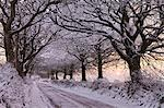 Tree lined country lane laden with snow, Exmoor, Somerset, England, United Kingdom, Europe