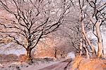 Morning sunlight illuminates a snowy Exmoor lane, Exmoor, Somerset, England, United Kingdom, Europe