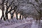Snow covered country lane through trees, Exmoor, Somerset, England, United Kingdom, Europe