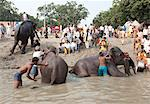 Young men, mahouts, washing tusked elephants in the holy River Ganges in preparation for Sonepur Cattle Fair, Bihar, India, Asia Stock Photo - Premium Rights-Managed, Artist: Robert Harding Images, Code: 841-06343895