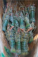Fresh lobster catch in the Marovo Lagoon, Solomon Islands, Pacific Stock Photo - Premium Rights-Managednull, Code: 841-06344114