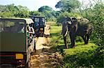 Asiatic tusker elephant (Elephas maximus maximus), close to tourists in jeep, Yala National Park, Sri Lanka, Asia Stock Photo - Premium Rights-Managed, Artist: Robert Harding Images, Code: 841-06344453