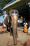 Benediction of elephant, Sri Jambukeshwara temple, Tiruchirappalli (Trichy), Tamil Nadu, India, Asia Stock Photo - Premium Rights-Managed, Artist: Robert Harding Images, Code: 841-06344621