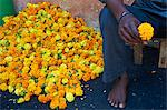 Marigolds, Flower market, Madurai, Tamil Nadu, India, Asia Stock Photo - Premium Rights-Managed, Artist: Robert Harding Images, Code: 841-06344639