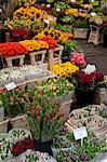Flower stall, Bloemenmarkt, Amsterdam, Holland, Europe Stock Photo - Premium Rights-Managed, Artist: Robert Harding Images, Code: 841-06344805