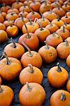 Large number of pumpkins for sale on a farm in St. Joseph, Missouri, United States of America, North America Stock Photo - Premium Rights-Managed, Artist: Robert Harding Images, Code: 841-06345428