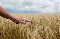 Close up of hand in tall grass Stock Photo - Premium Royalty-Freenull, Code: 649-06352931