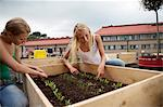 Teenage girls working in plant box Stock Photo - Premium Royalty-Free, Artist: Dan Jurak, Code: 649-06352945