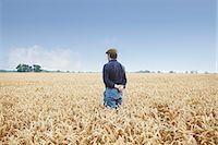 Farmer standing in field of wheat Stock Photo - Premium Royalty-Freenull, Code: 649-06353298