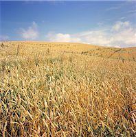 Hokkaido Fields Stock Photo - Premium Rights-Managednull, Code: 859-06354544