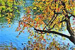 Branches with beautiful colorful autumn leaves over blue water Stock Photo - Royalty-Free, Artist: TatyanaSavvateeva             , Code: 400-06367181