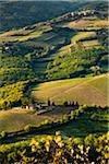 Farmland, Radda in Chianti, Tuscany, Italy Stock Photo - Premium Rights-Managed, Artist: R. Ian Lloyd, Code: 700-06367880