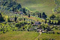 Vineyard, San Gimignano, Siena Province, Tuscany, Italy Stock Photo - Premium Rights-Managednull, Code: 700-06367911